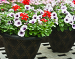 Didier Farms Planted Containers